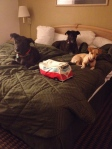 Dogs in the hotel room.  A few showers.  A big bed to hold all of us.  Free breakfast.  Free wifi.