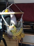 Fruit basket that hangs in van.  Typically cut up into oats/yogurt/nuts mixture for breakfast.