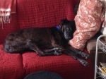 Seri is pretty comfy on the couch in the Puerto Penasco trailer.