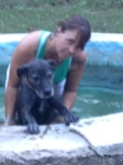 Bathing the dog in a hot pool.