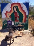 At the top of a particularly treacherous mountain pass was this large, colorful painting of Mary.  The dogs were curious about all the candles and even an old telephone at the base.  Notice the VW bug in the lower right corner.