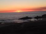 coyote cals sunset