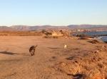 dog walk at coyote cals
