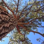 park san pedro tree branches