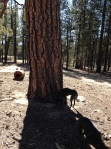 park san pedro tree trunk