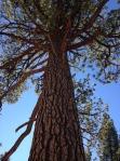 park san pedro tree up