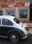 green bug1