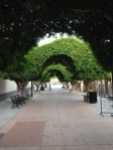 The beautiful Loreto walkway.  A closed-to-cars plaza with shops, cafes, church, etc.