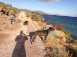playa armenta dog walk
