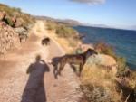 playa armenta dog walk