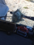 puffer fish on windshield