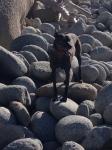 seri on boulders