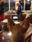 visiting friends in cabo san lucas chiquitas ears