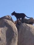 zeb on rocks
