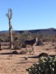 donkeys1