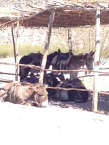 18 boquillas donkeys