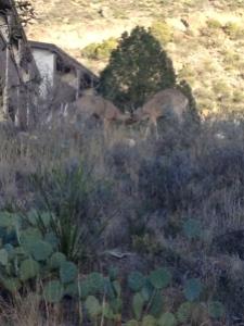 22 deer