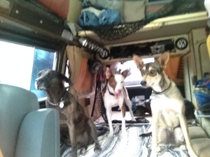 Dog party in the VW van!  Taking all the family members dogs for a ride is always good for a laugh!