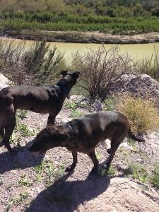 dogs at rio grande1