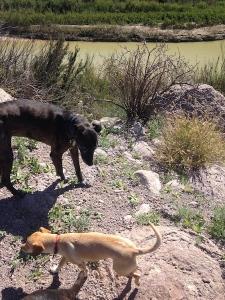 dogs at rio grande2