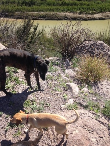 dogs at rio grande2