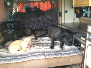 dogs resting in van