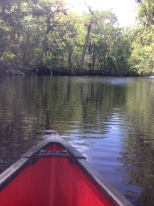 Canoe ride on the Suwannee River.