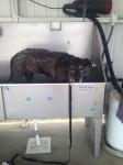 seri dog wash