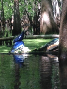 Also found this floating in the swamp of the Suwannee River.