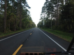 Typical highway scenery.  High, thick grow of trees, vines and shrubs with wide shoulders of grass.
