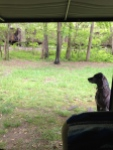 hot springs train watching with seri