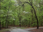 kentucky woods mammoth cave