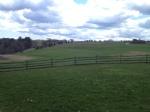Field of woodstock