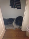 traveling dogs sleep in closets
