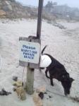 zeb private beach