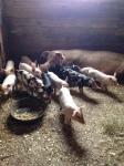 csa farm visit 4