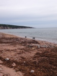 dogs at play- cape breton