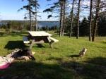 Dogs in Nova Scotia park