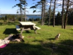 Dogs in Nova Scotia park
