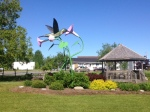 middle mus ns hummingbird