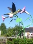 middle musquodoboit hummingbird