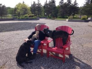 posing dogs 1