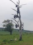 shoe tree new brunswick