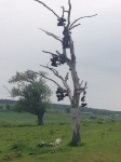 shoe tree new brunswick