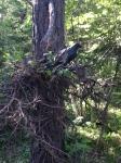 crow cache1
