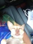 Mango sleeping on the navigator