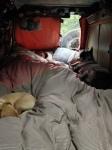 sleeping in doggie style