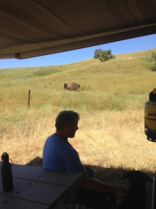 buffalo in badlands camp1