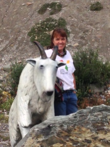 posing with mountain goat