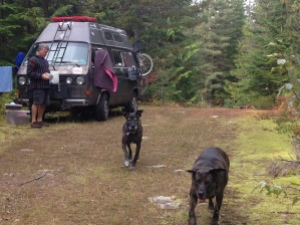 Dogs running by van